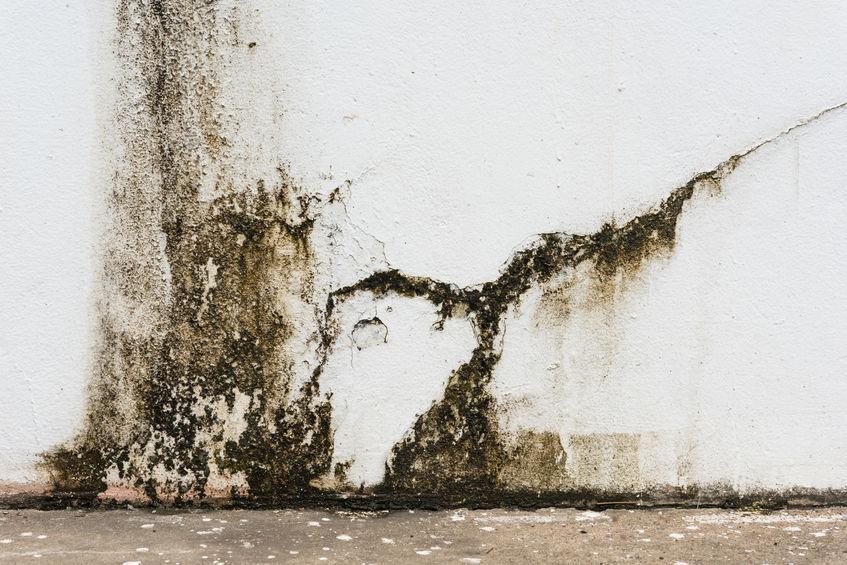 37605461 - mildewed walls